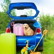 Dog, bags, toys, car ready for trip — Stock Photo