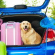 Dog and luggage in the trunk — Stock Photo