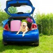 Dog and luggage in the car trunk — Stock Photo