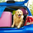 Dogs and luggage to go on trip — Stock Photo #32012969