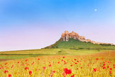 Spis Castle and poppy field — Stock Photo