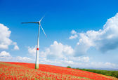 Wind turbine in poppy flowers field — Stock Photo