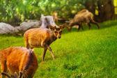 Herd of deer — Stock Photo