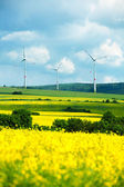 Field with wind turbines — Stock Photo