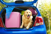 Dogs and luggage to go on trip — Stock Photo