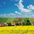 Rapeseed field and houses  — Stock Photo