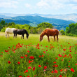 There horses grazing grass — Stock Photo #36201923