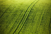 Green wheat field with tracks — Stock Photo