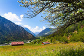 Flowers field near Alps — Stockfoto