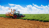 Tractor plowing lavender field — Stock Photo