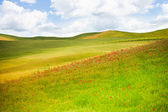Fält i italien — Stockfoto