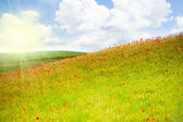 Spring field in Tuscany — Stock Photo