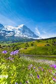 Paysage suisse — Photo