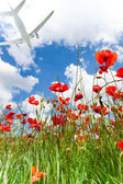 Poppy flowers with airplane jet — Stock Photo