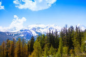 Forest view with beautiful Swiss mountains — Stock Photo