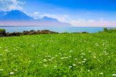 женевское озеро вблизи альп — Стоковое фото