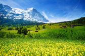 Beautiful Swiss landscape — Stock Photo