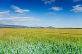Green and yellow field — Stock Photo