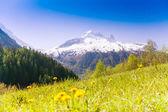 Valley   near Mont Blanc — Foto de Stock