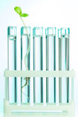 Green plant in test tubes which are with water — Foto de Stock