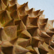 Durian Husk — Stock Photo