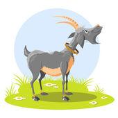 Goat — Stock Vector