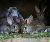 A female rabbit with a brood of young rabbits — Stock Photo