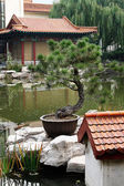 Pine bonsai, Jinan, Shandong Province, China — Stock Photo