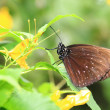 Stock Photo: Brown butterfly resting on leaf