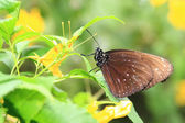 Brown butterfly resting on leaf — Stock Photo