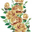 Stock Photo: Beige roses