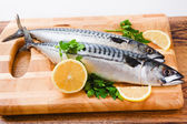 Couple of fresh mackerel — Stock Photo