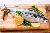 Couple of fresh mackerel — Stock Photo