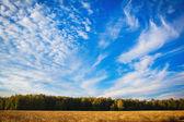 Field of wheat — Stock Photo