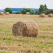 Straw Haystacks on the grain field — Stock Photo