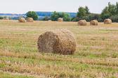 Covoni di fieno paglia sul campo di grano — Foto Stock