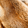 Stock Photo: Fox fur background
