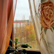 Stock Photo: Fall outside window. Rain drops on glass