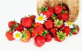 Strawberry scattered from basket — Stock Photo