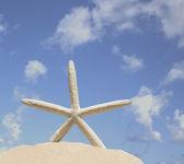 Rozgwiazda na piasku na tle niebieskiego nieba — Zdjęcie stockowe