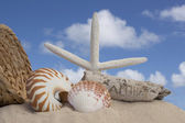 Seashells and sand with blue sky background — Stok fotoğraf