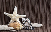 Seashells driftwood on brown background — Foto de Stock