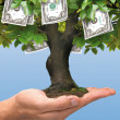 Money Tree — Stock Photo #21200775