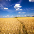 Stock Photo: Agricultural field