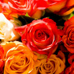 ������, ������: Various roses