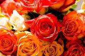 Verschillende rozen — Stockfoto