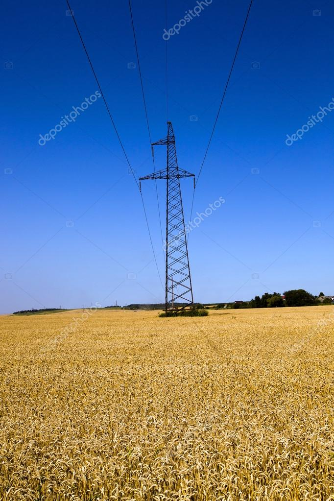 an agricultural field through which pass electric columns  Stock Photo #13416920