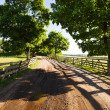 Stock Photo: The rural road