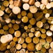 Photo: Cut logs