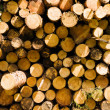Cut logs — Stockfoto #13747695